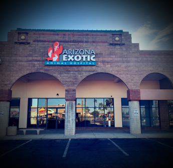 The World S Largest Exotics Practice Is Now In Tucson Arizona Exotic Animal Hospital Veterinary Services