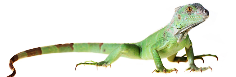 Cryptosporidiosis Arizona Exotics Lizards Resources