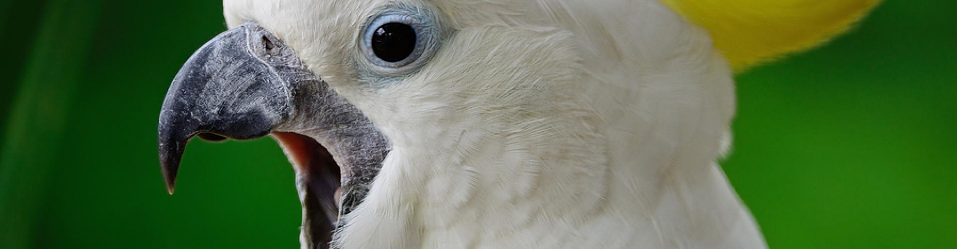 Arizona Exotic Animal Hospital | Veterinary care for exotic